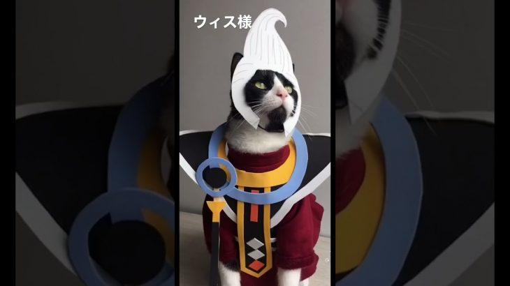 コスプレ猫 #short #コスプレ #ねこ #ドラゴンボール #ドラゴンボール超 #ウィス